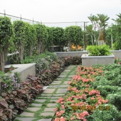 gallery/pic - terrace gardening